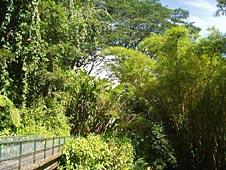 Big Island, Hamakua Coast, Akaka Waterfalls State Park