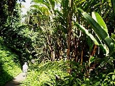 Big Island, Hamakua Coast, Akaka Falls Park