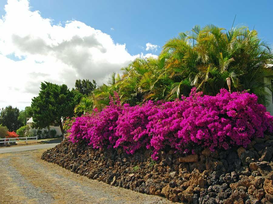 Big Island Rentals, Hawaii