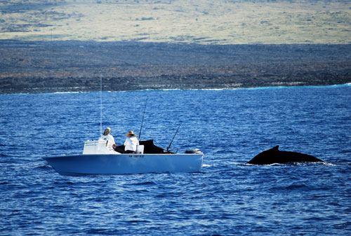 Big Island of Hawaii Fishing and Whale Watching