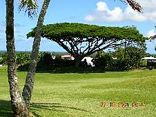 Big Island, Hilo, golf course