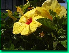 Big Island vacation rental, garden with tropical flowers